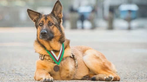 Lucca was honoured for her service during 400 missions in Iraq and Afghanistan