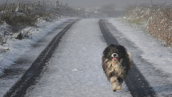 """On the run: """"canine venereal diseasetumours consist not of the host individual's cells, but of the cells from a dog that originally lived thousands of years ago."""""""