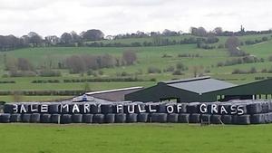 'Bale mary full of grass' - near Ballykeeran , Athlone, Co Westmeath (Pic: Teresa Clyne)