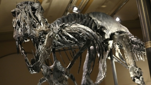Meat-eating relatives of Tyrannosaurus rex were in more gradual decline than herbivores, research suggests