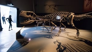 T-Rex was among the species wiped out during the Cretaceous extinction 66 million years ago