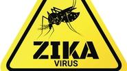 Zika virus may come to Europe