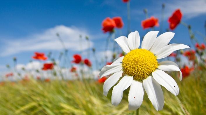 """Spring Shine"" by Colm Keegan"