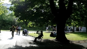 The body of a man was found in St Stephen's Green on Monday