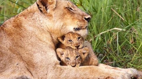 Animal Super Parents