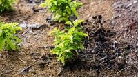 Spring Gardening Tips: Best Way to Take Cuttings