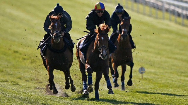 Leading Derby runners enjoy spin at Epsom