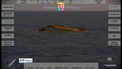 Dozens feared dead after boat capsizes in Mediterranean