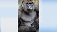 Dublin Zoo confirms death of Harry the gorilla