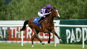 The versatile Minding has won four of her five Group One assignments this season over distances ranging from a mile to a mile and a half