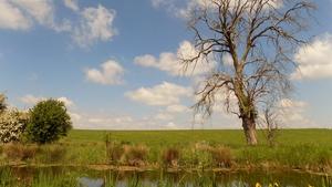 Royal Canal at Enfield (Andy McGeough)