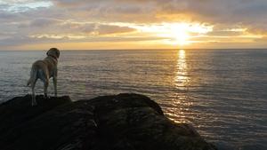 Solar the dog watches the sunrise off Bray Head (Michael Galligan)