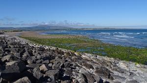 This rocky shore at Strandhill (Cian Burns)