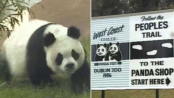 Ming Ming and Ping Ping at Dublin Zoo (1986)