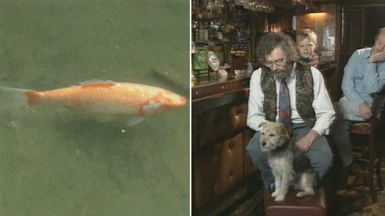 Goldfish and Dog in North Kerry (1996)