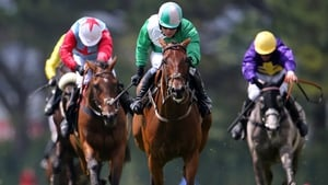 Aranhill Chief (centre) looks to earn a place in the Galway Plate