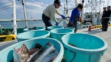 Local fishermen unload fish from boats trawling the waters near the destroyed nuclear power plants at Soma port, Fukushima prefecture