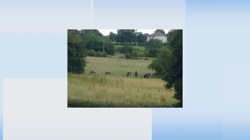 The army was called in to carry out the cull