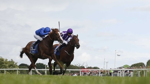 Hawkbill (near side) will compete in the Qipco Irish Champion Stakes