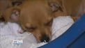 20 puppies seized by animal protection societies
