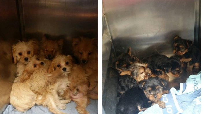 '30,000 puppies per year are illegally smuggled to the UK'
