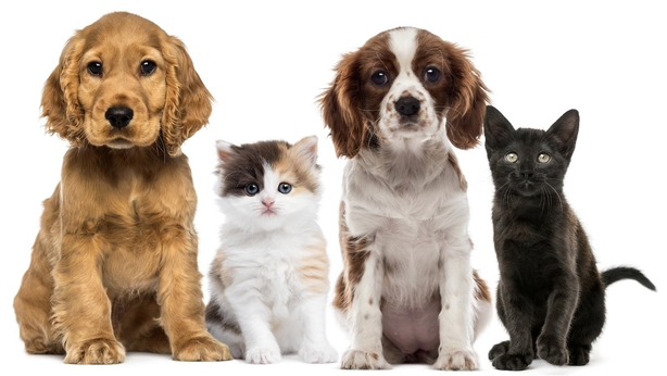Are you willing to insure your pet?
