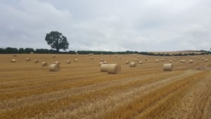 Bailing hay at Hurlestone, Ardee in Co Louth (Pic: Siobhan McCoy)
