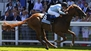 Condon weighing up Hopeful run for In Salutem