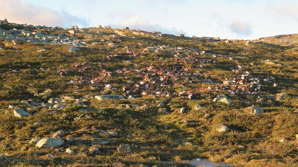 The animals apparently died after lightning struck the central mountain plateau