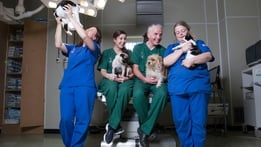 The Pet Surgeons