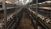 McDonald Mushrooms has been in operation for 17 years near Tipperary town