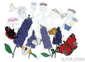 Naturama Butterflies © Melissa Doran