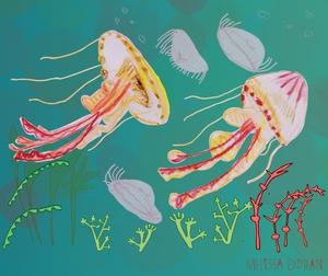 Naturama Jellyfish © Melissa Doran