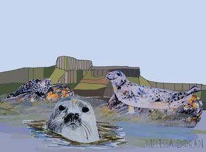 Naturama Gray Seals © Melissa Doran