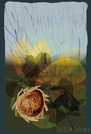 Naturama Mouse Hibernating © Melissa Doran