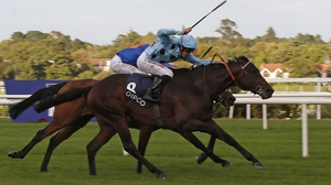 Almanzor's connections have left the colt in the Arc 'as a precaution'