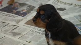 Dublin Port Puppy Seizure