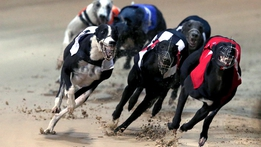 Greyhound: Derby Final