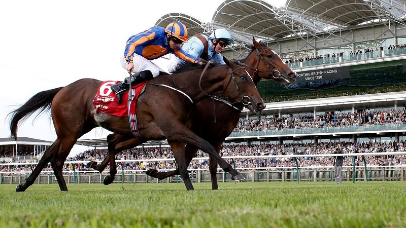 Image result for Brave anna cheveley park stakes