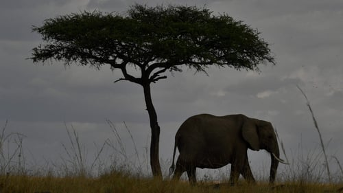 South Africa hosts 17th conference on endangered species