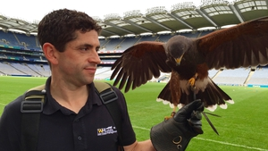 Barry Nolan with Alfie the harris hawk at Croke Park
