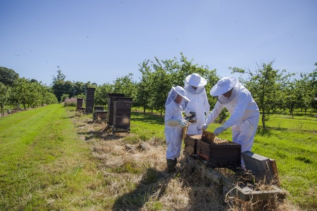 Bee keeping at Tourin House