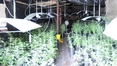 €1.2m cannabis seized in Tipperary operation