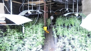 A property raided in Hollyford has been described as a sophisticated grow house