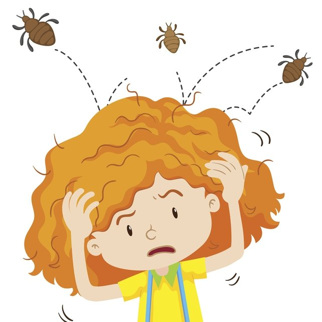 Headlice cannot jump but they can crawl 23 cm in a minute