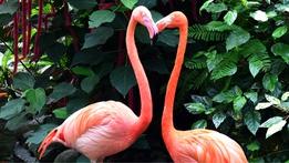 Animals and Love