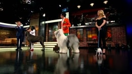 The Late Late Show Extras: Dog Show