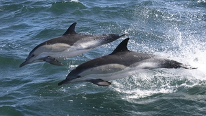 World Oceans Day is held on 8th June, originating from the 1992 Earth Summit.