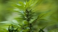 Medicinal cannabis bill passes Dáil without vote