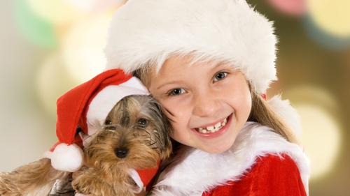 Thinking of getting a puppy this Christmas?